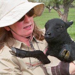 Desert Weyr – Lamb, Mutton and Apples